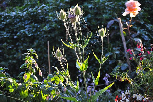 Trethiggey Plant Life
